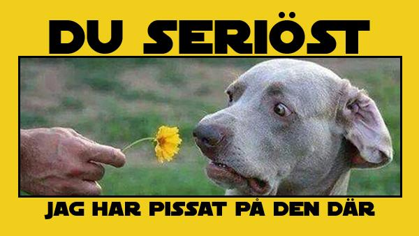10 memes med roliga hundar - det här fick oss alla att skratta högt