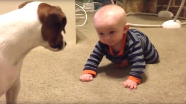 Den 5 månader gamla bebisen ramlar hela tiden - då bestämmer sig hunden för att hjälpa till