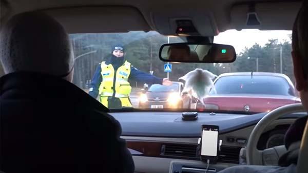 Nykterhetskontrollen blev en mycket pinsam situation för polisen