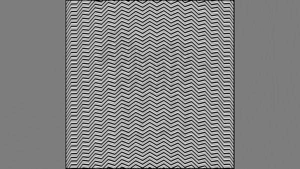Synvillan: Kan du hitta det dolda djuret i bilden inom 20 sekunder?