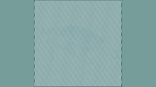 Synvillan: Kan du hitta det dolda djuret i bilden?