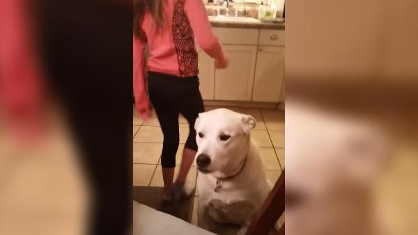 Hunden Charlie ville berätta något för sin matte - lyssna noga på detta och försök att hålla dig för skratt