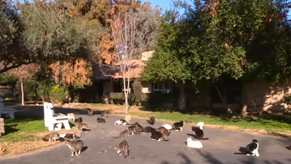 Hon bor med mer än 1000 katter - kolla bara när hon visar upp husets insida