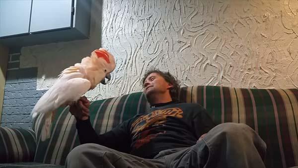 Han frågar sin kakadua om hon älskar honom - svaret han får är bara för bra